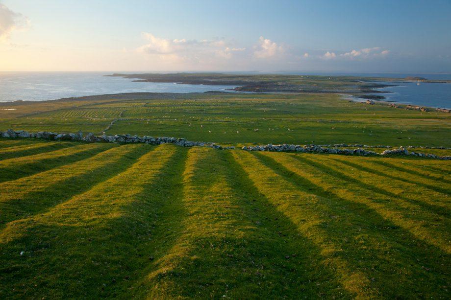 Potato fields in County Mayo, Ireland.