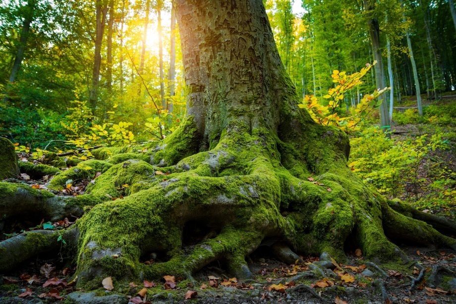 Ancient woodland saved from HS2 — but only for the time being, and campaigners are worried