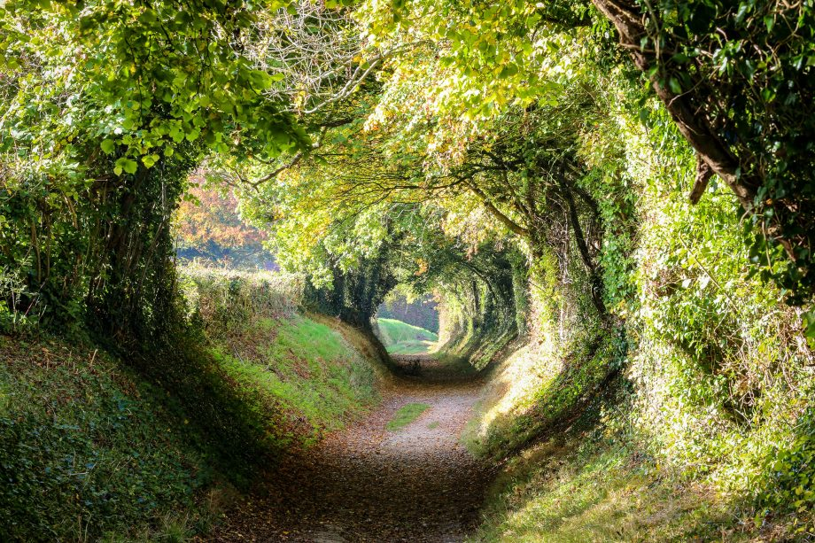 A natural tunnel to be found in the Sussex countryside near Halnaker.