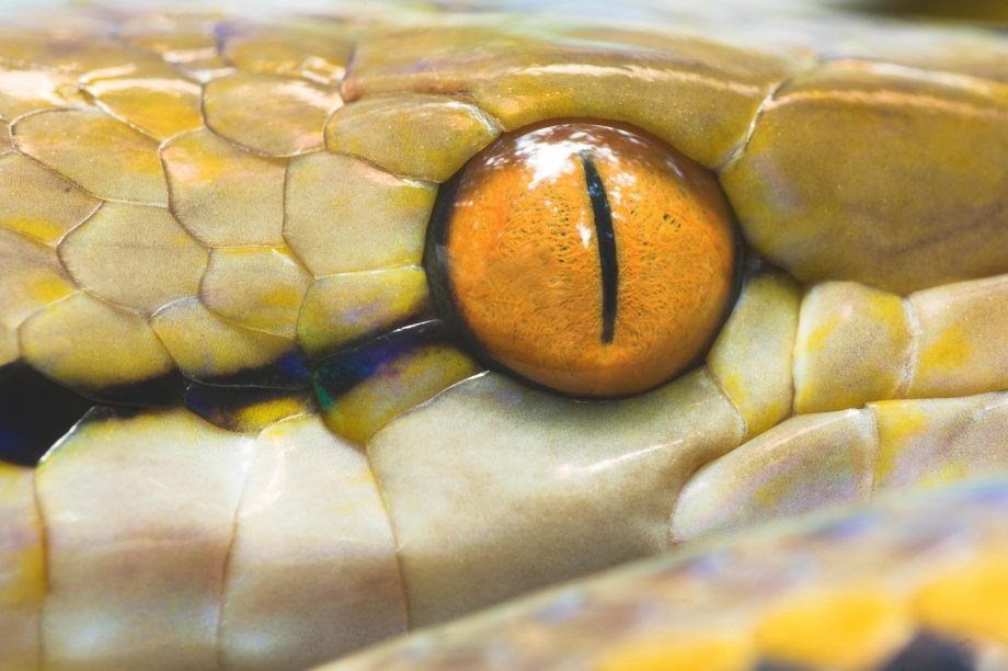 The Reticulated Python