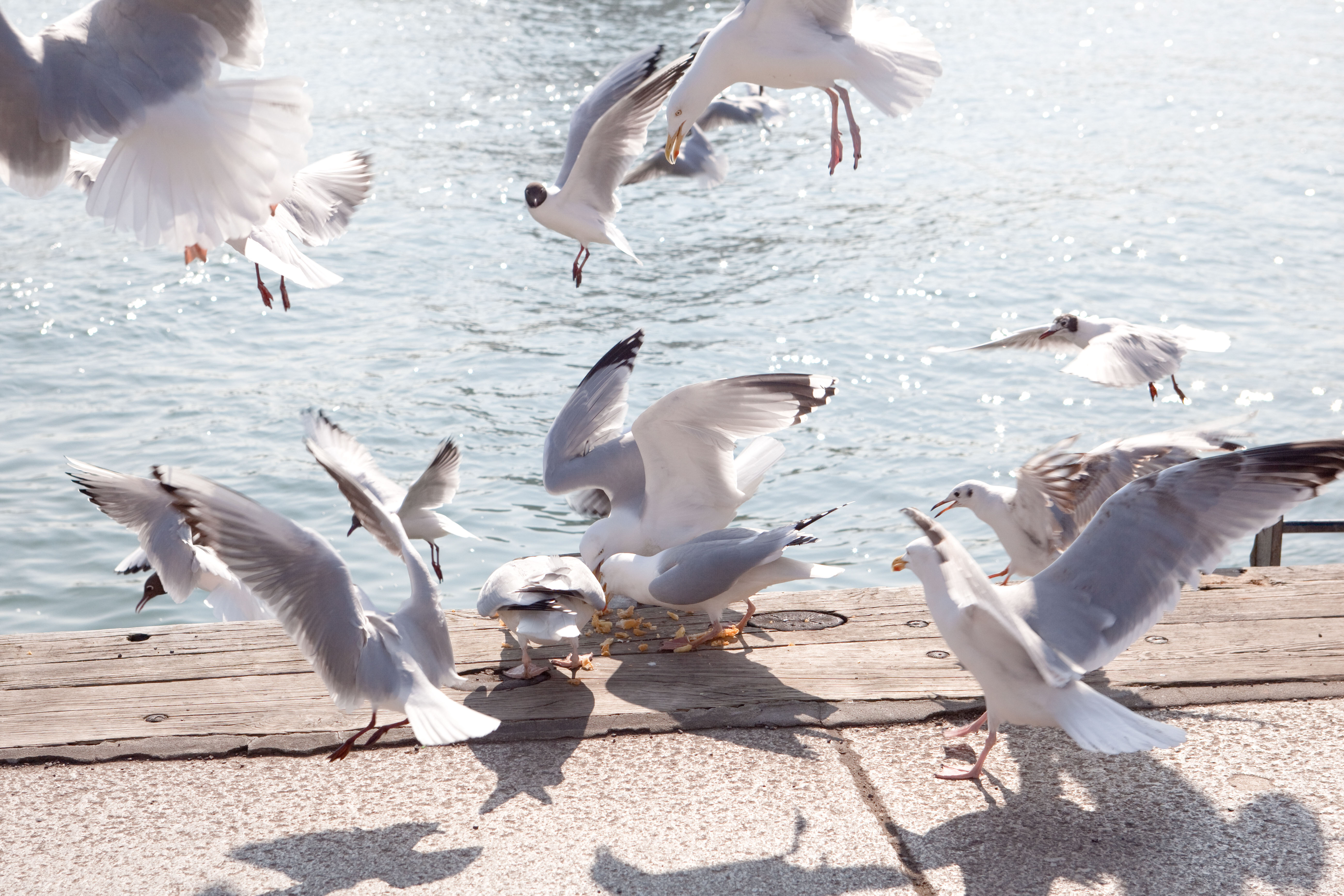 Revealed: How to stop seagulls from stealing your chips