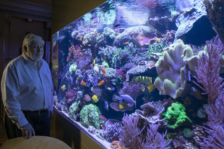 David Saxby's world- famous private aquarium, containing exotic fish and coral.