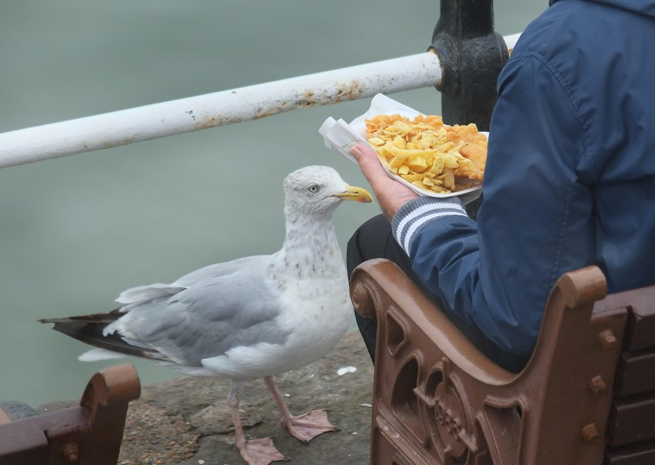 If a seagull is begging for your fish and chips, help is at hand.