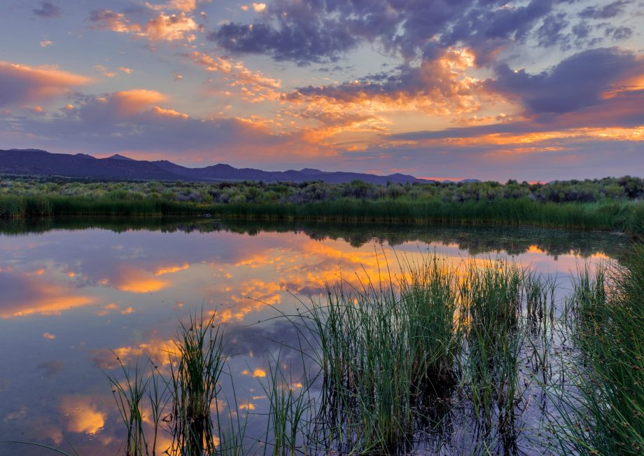 Ponds are places of tranquility for reflection — and priceless havens for wildlife.