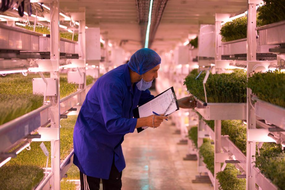 Growing Underground: London air raid shelter provides unlikely setting for salad farm