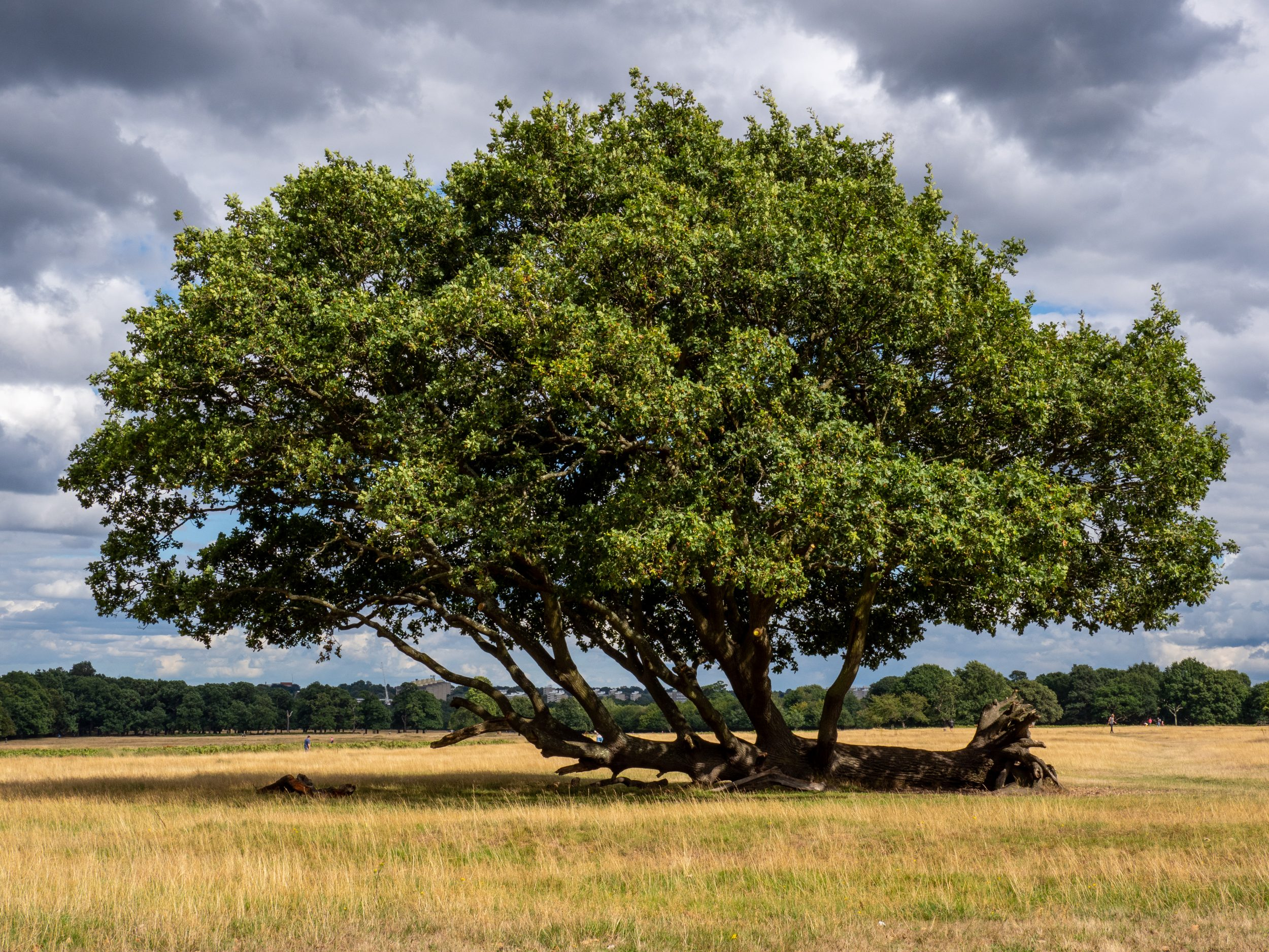 Country Life Today: Your favourite tree needs your vote - Country Life