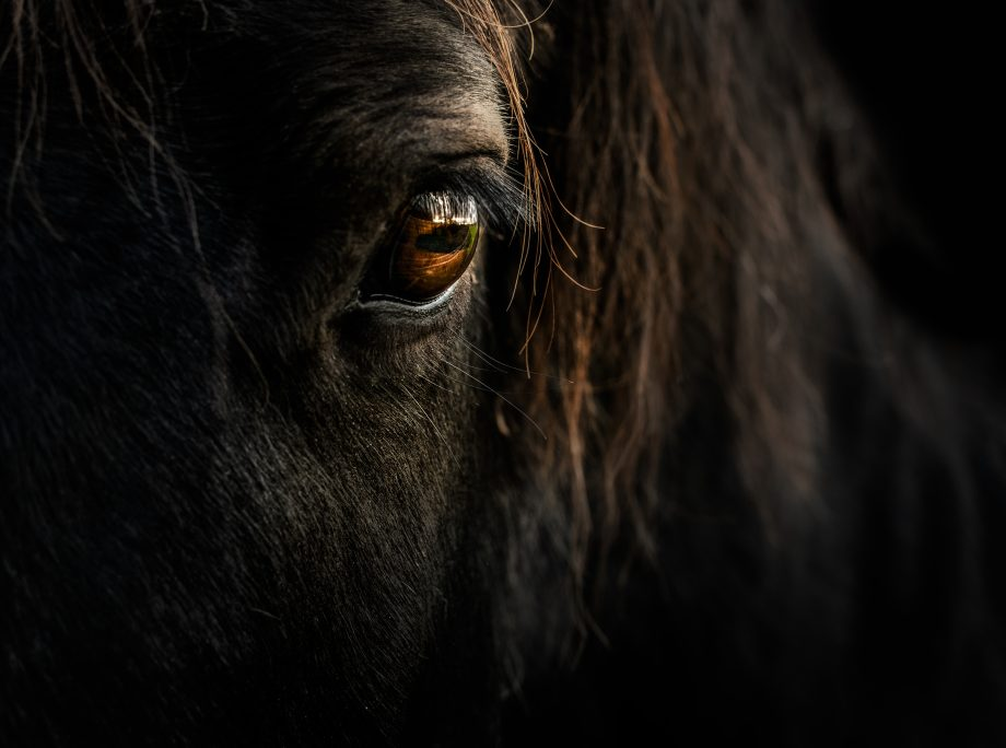 Curious Questions: Can horses really heal humans?