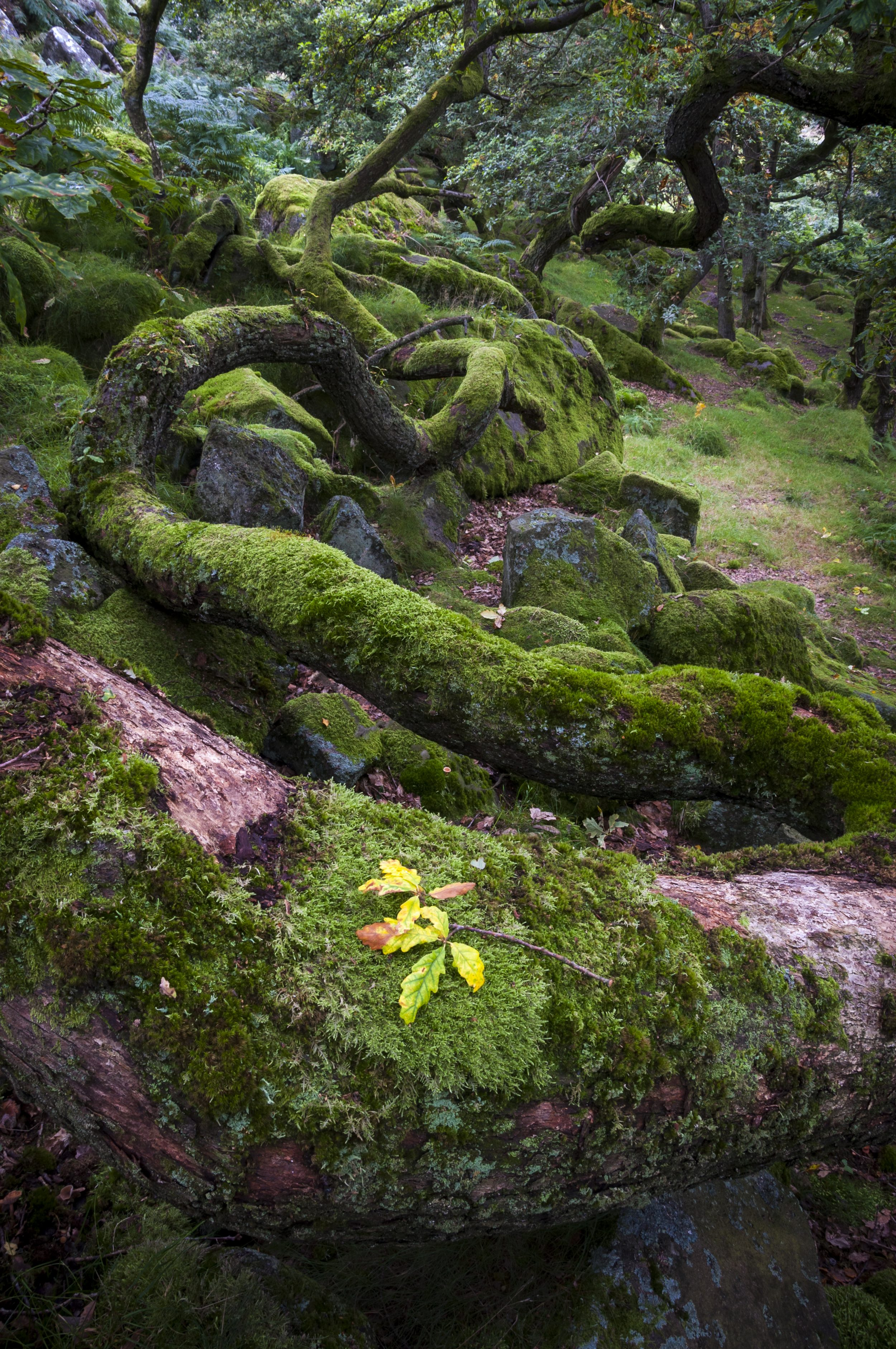 Moss: The 350-million-year-old plants that turn the