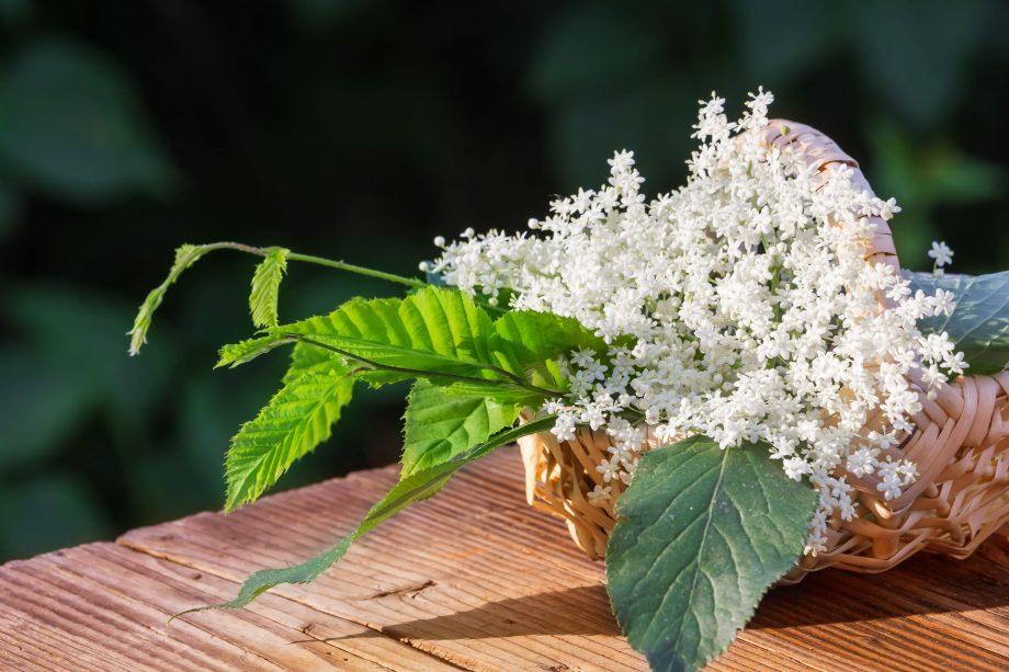 Elderflower juice, herbs