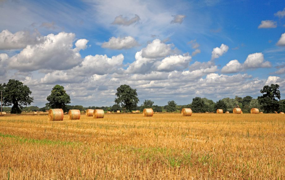 A country landscape of harvested farmland with round straw bales in East Norfolk at Freethorpe, Norfolk, England, United Kingdom, Europe.
