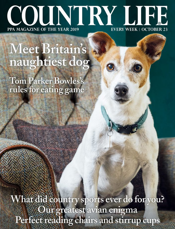 Country Life 23 October 2019