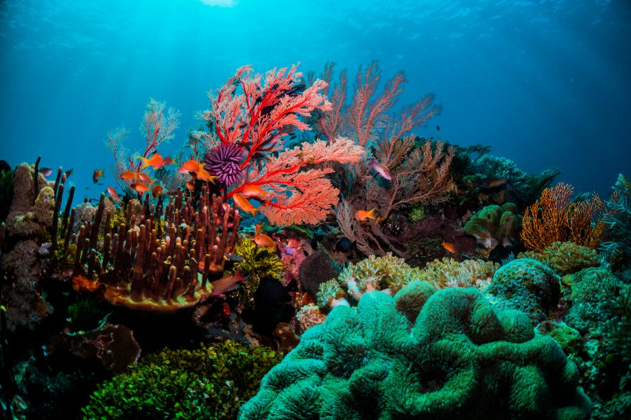 Coral in Indonesia