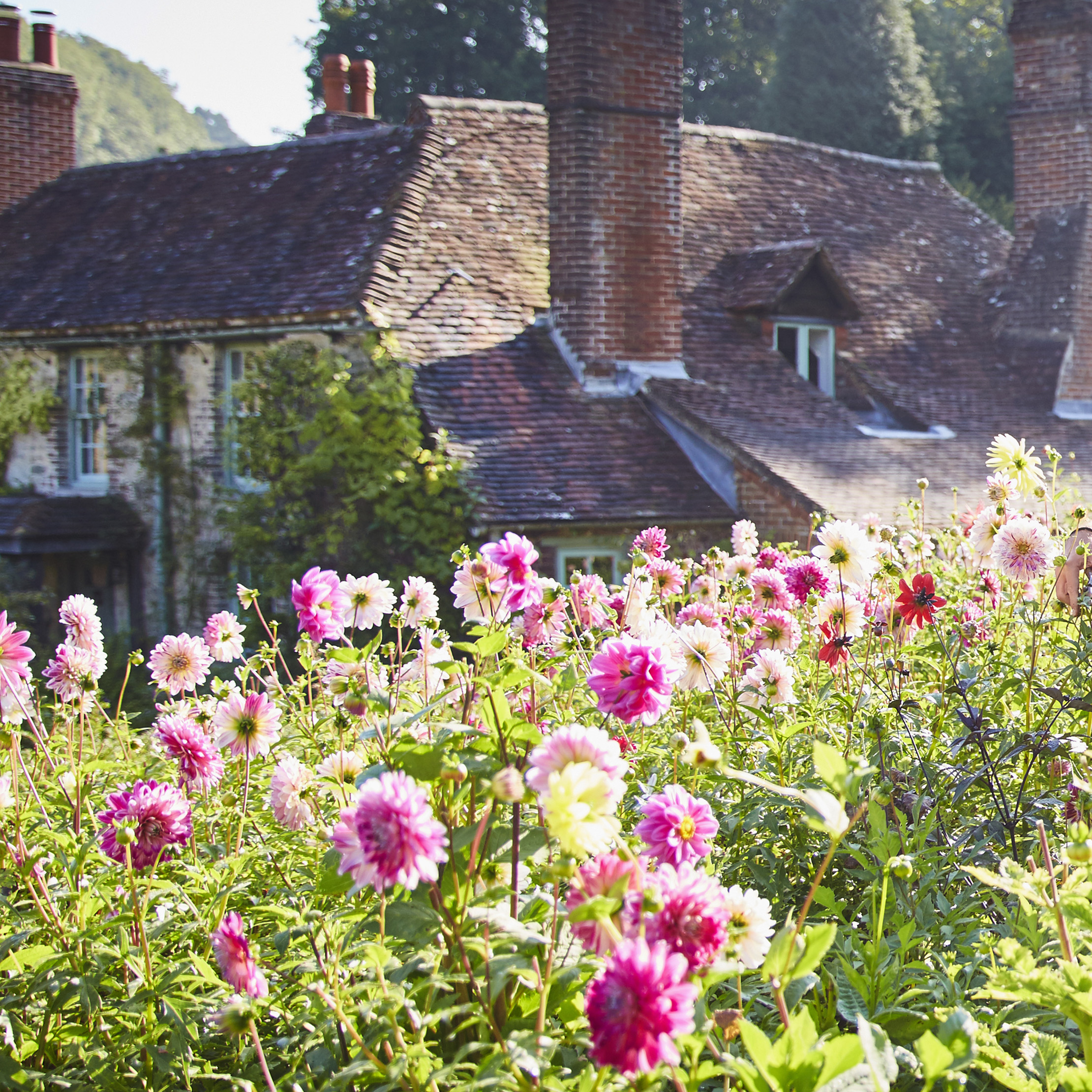 Alan Titchmarsh How I Grow Dahlias And Why They Re My Second Most Infallible Plants Country Life