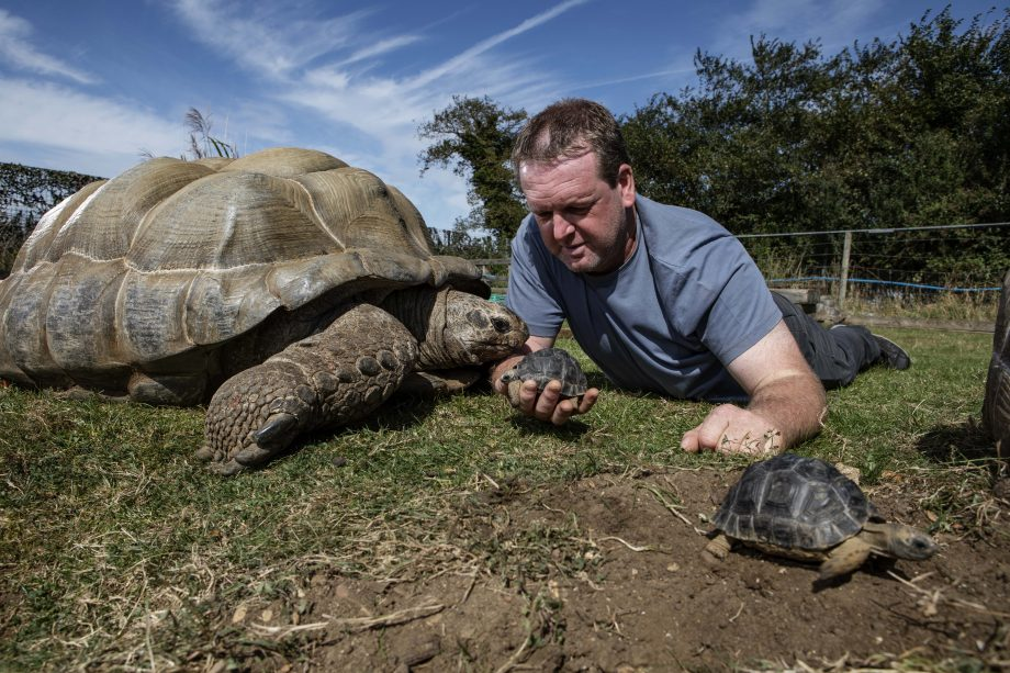 Adrian Graham and his giant Aldabra Tortoises