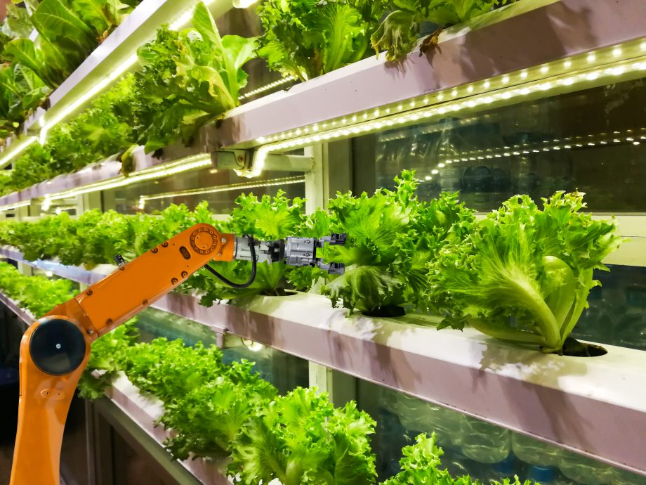 Robot operates in a vertical farm