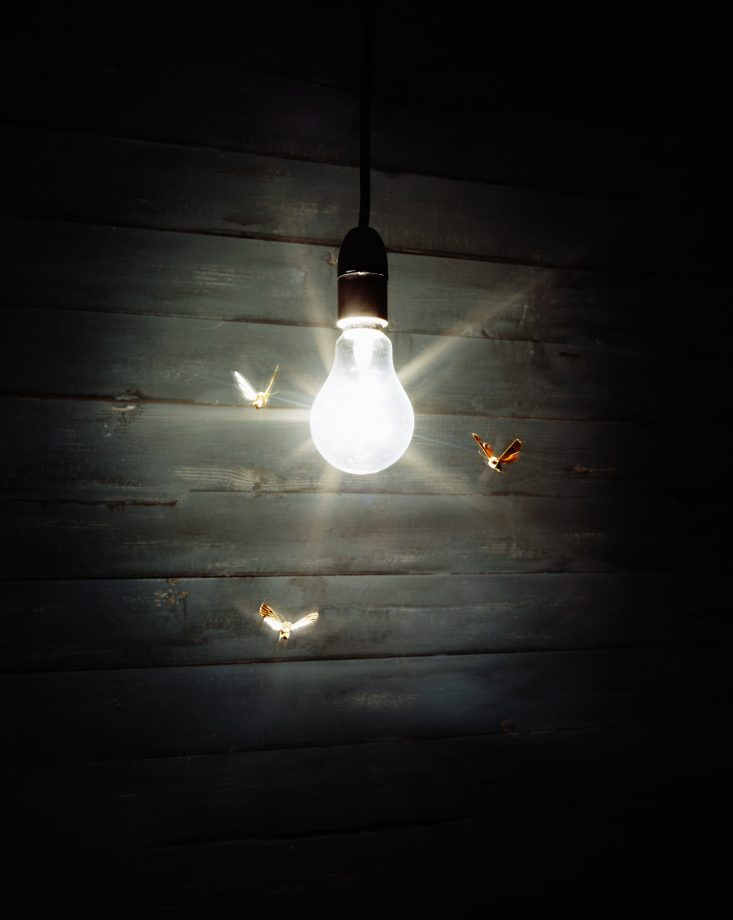 Moths flying around a lightbulb