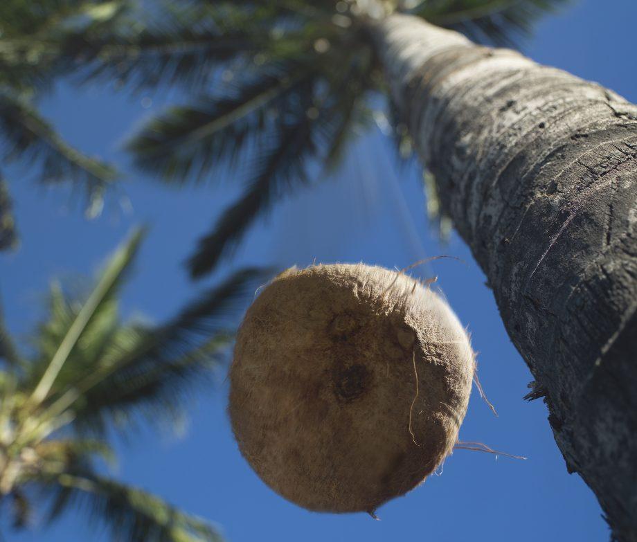 Resultado de imagem para coconut falling gravity