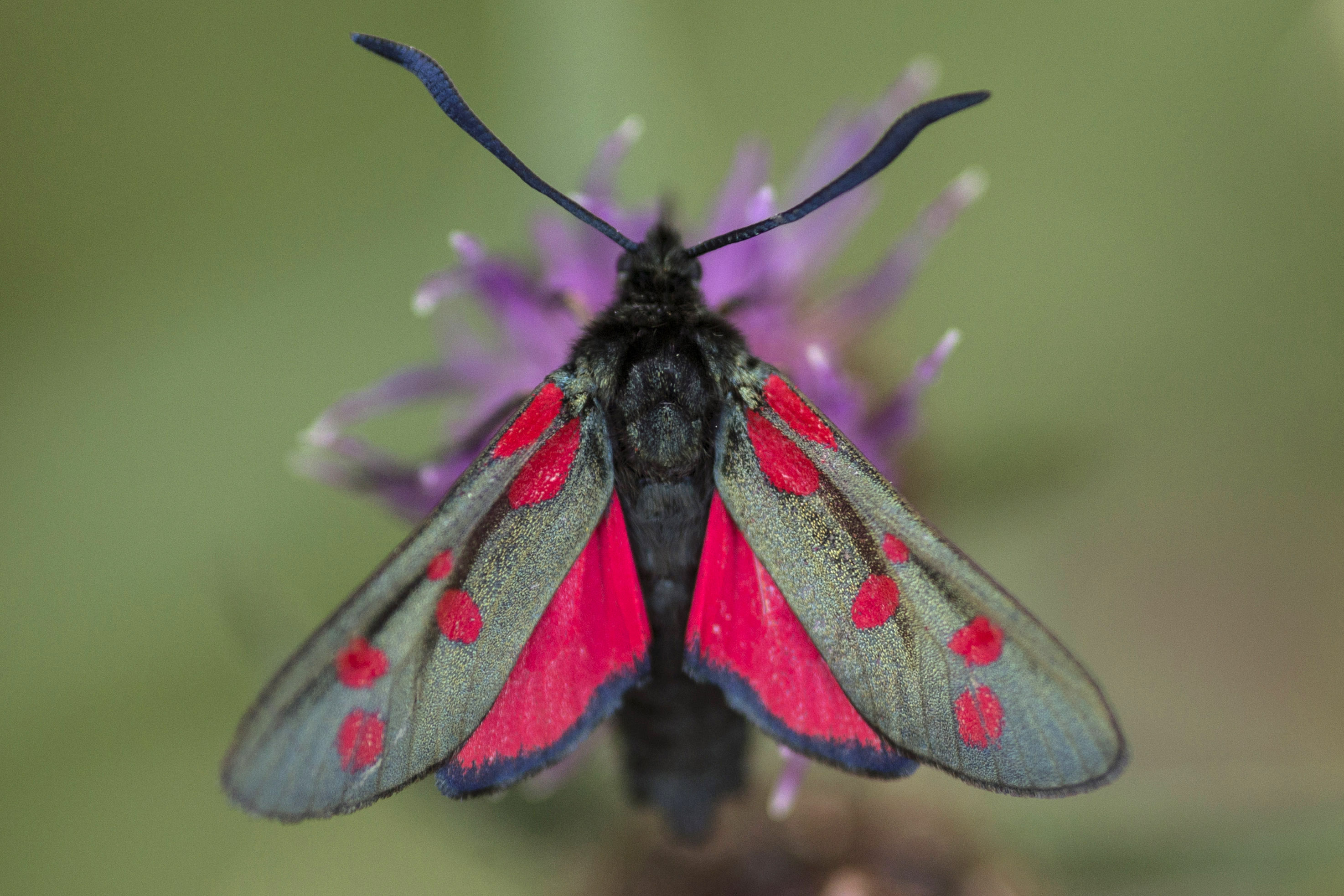 Country Life Today: Fresh hope for moths