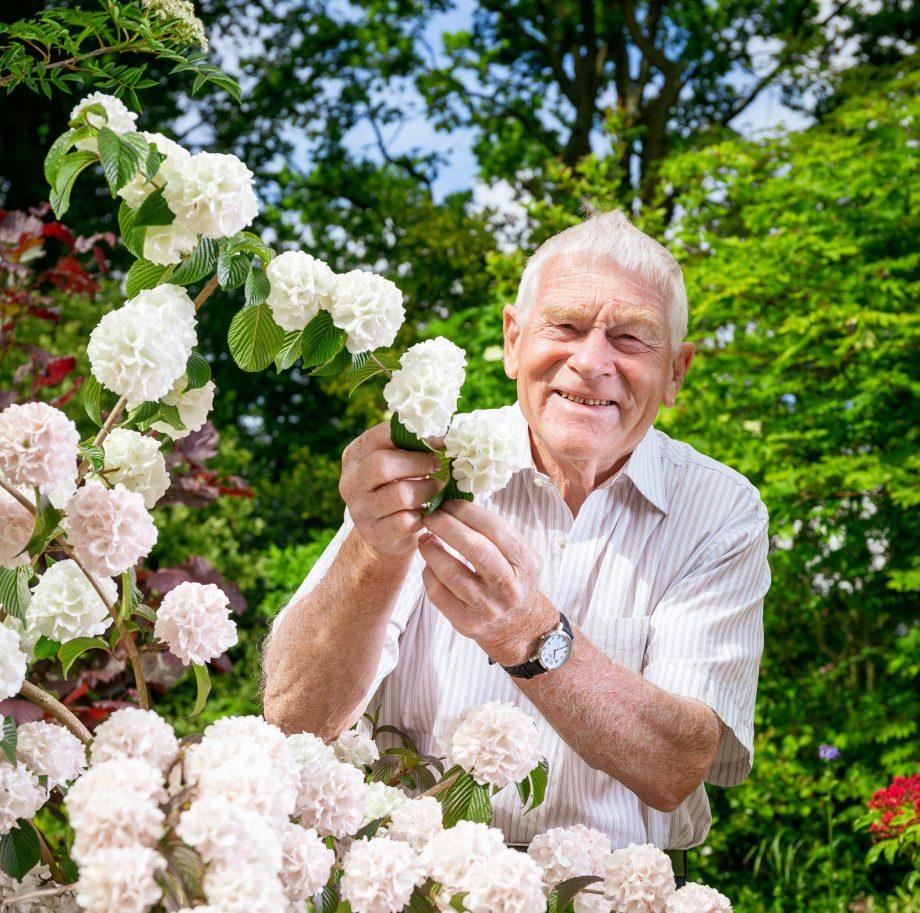 Peter Catt, nurseryman and shrub breeder, at Liss Forest Nursery with Vibernum Plicatum Rosace.