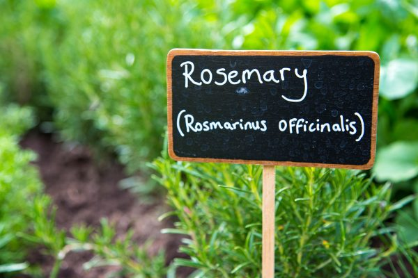 Gardening's oddest minefield: How naming and re-naming plants can send botanists, gardeners and writers into a spin - Country Life