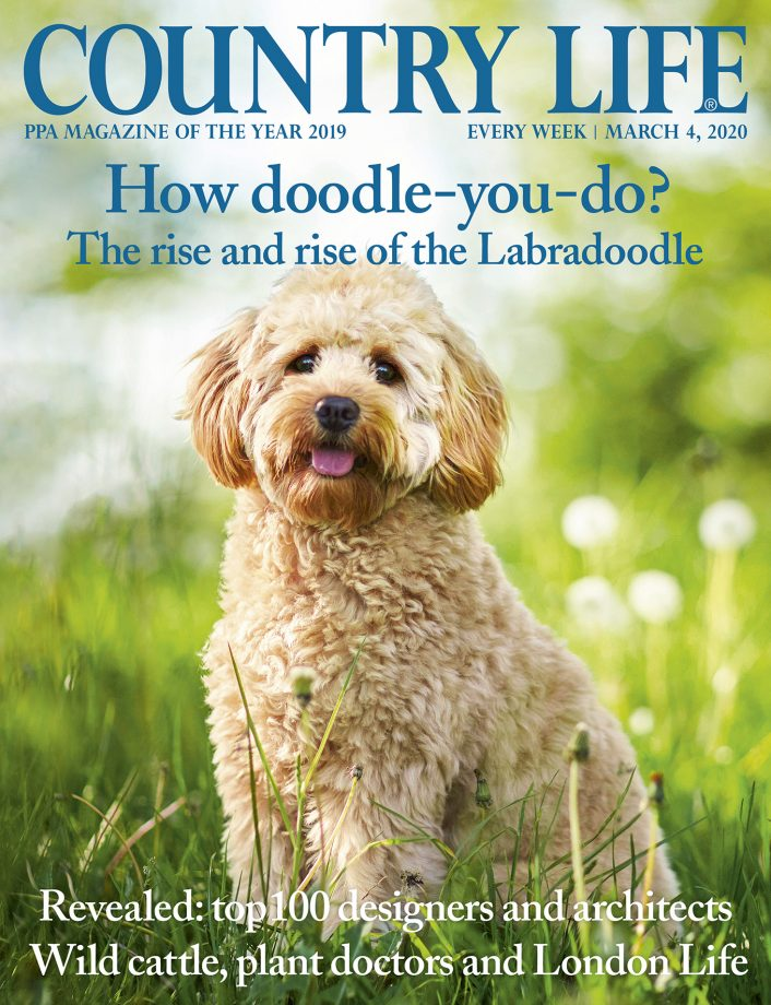Country Life magazine title front cover 4 March 2020