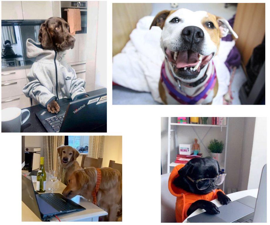 dogs of social media