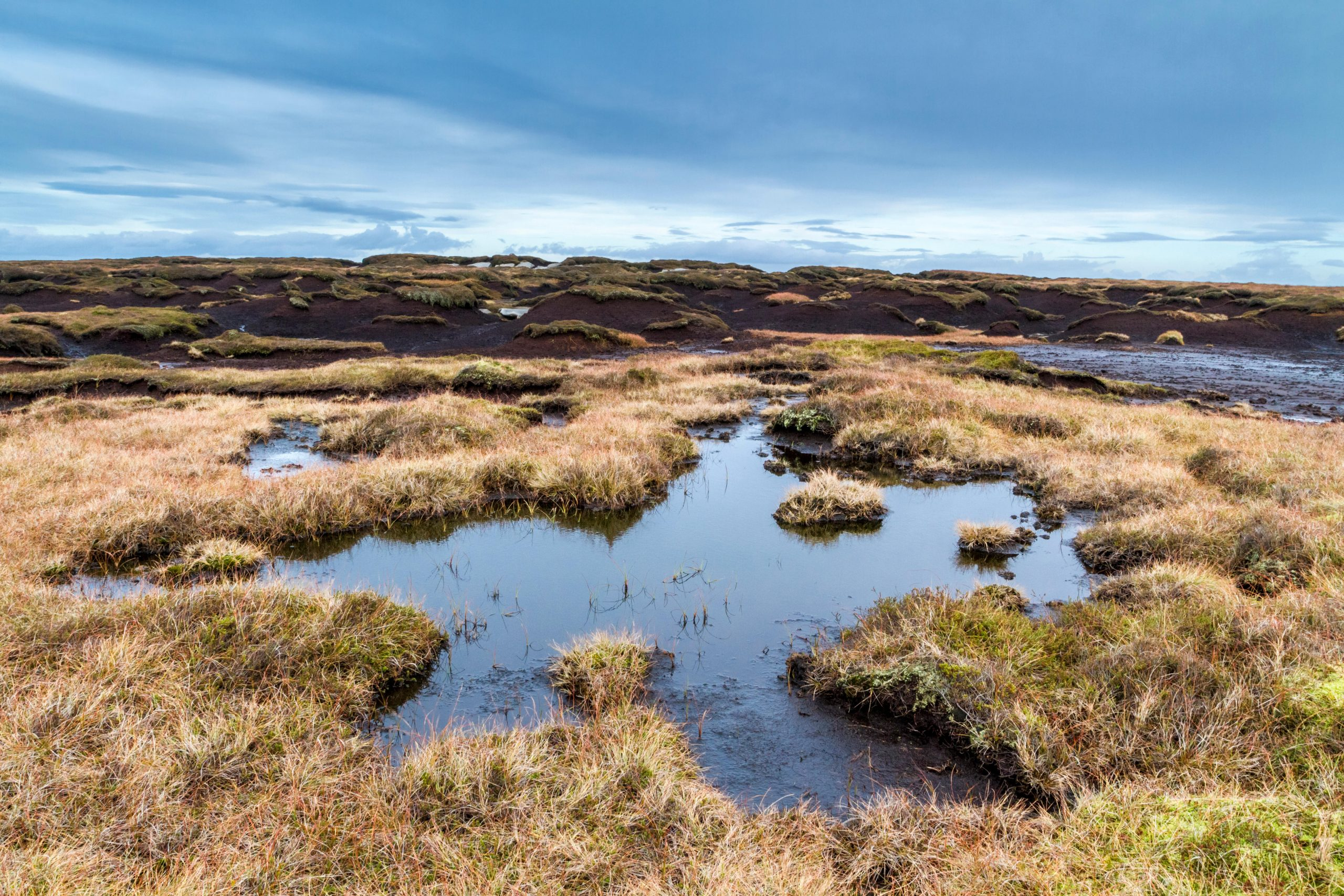 Peat takes millennia to generate, and bogs store 10 times more carbon than  forests — using it in gardening is madness - Country Life