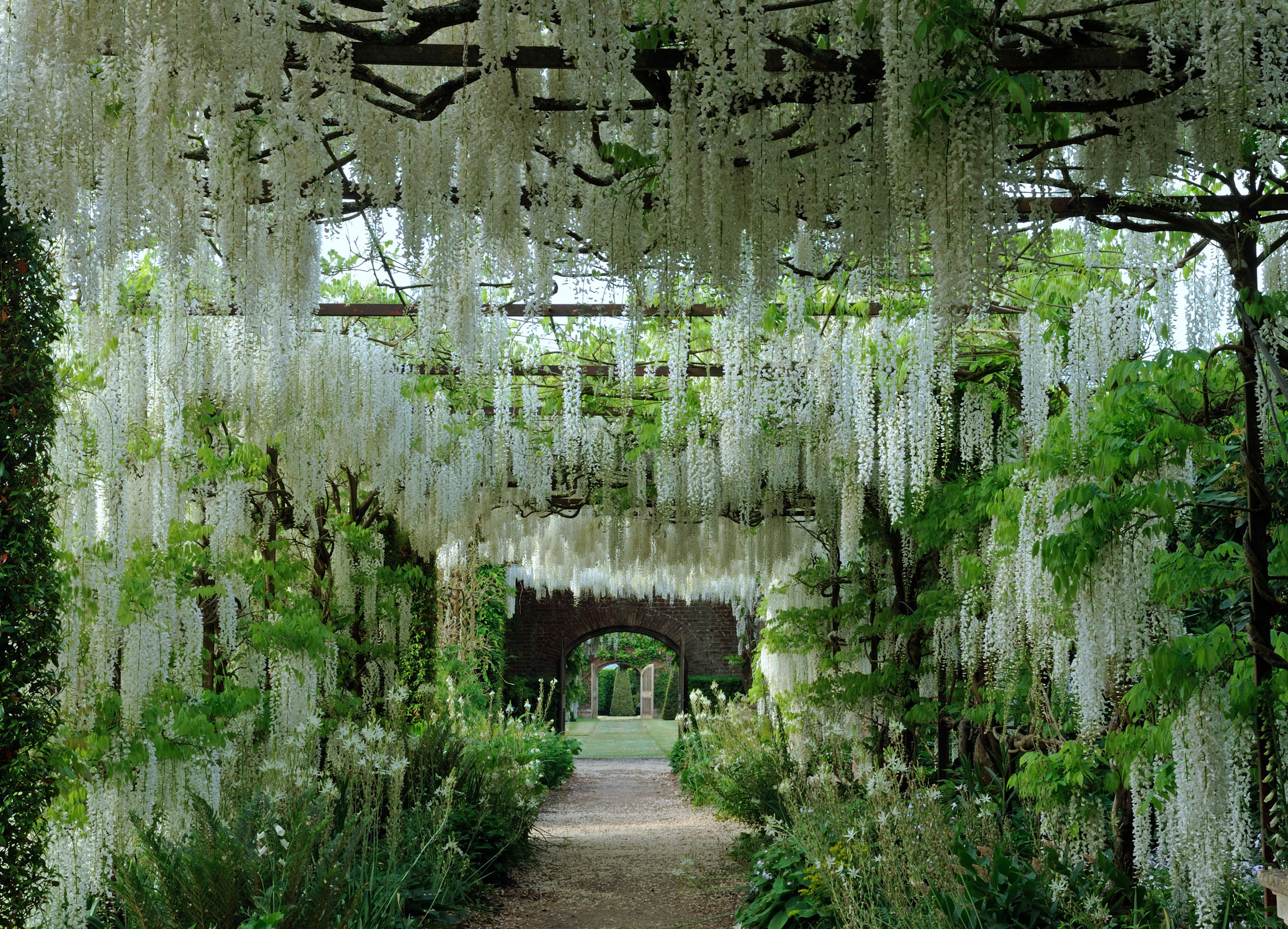 The secrets of the wisteria pergolas in the Private Gardens at Petworth House - Country Life