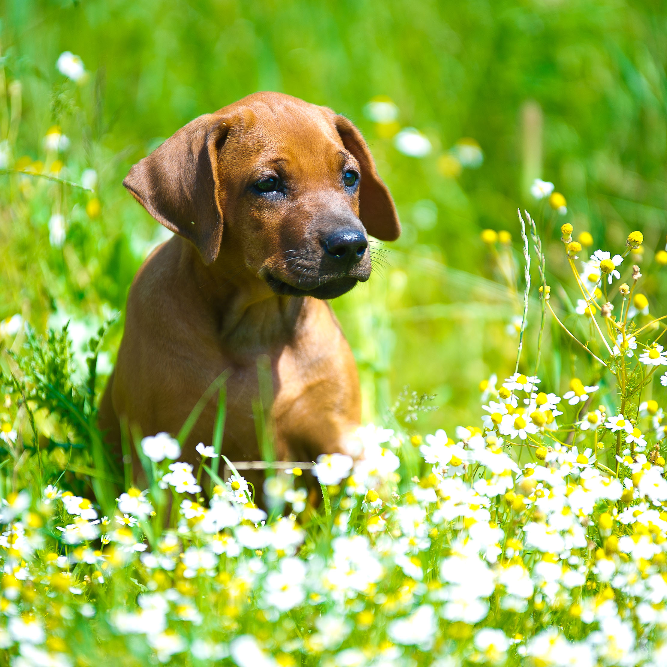Garden Plants That Are Deadly To Dogs