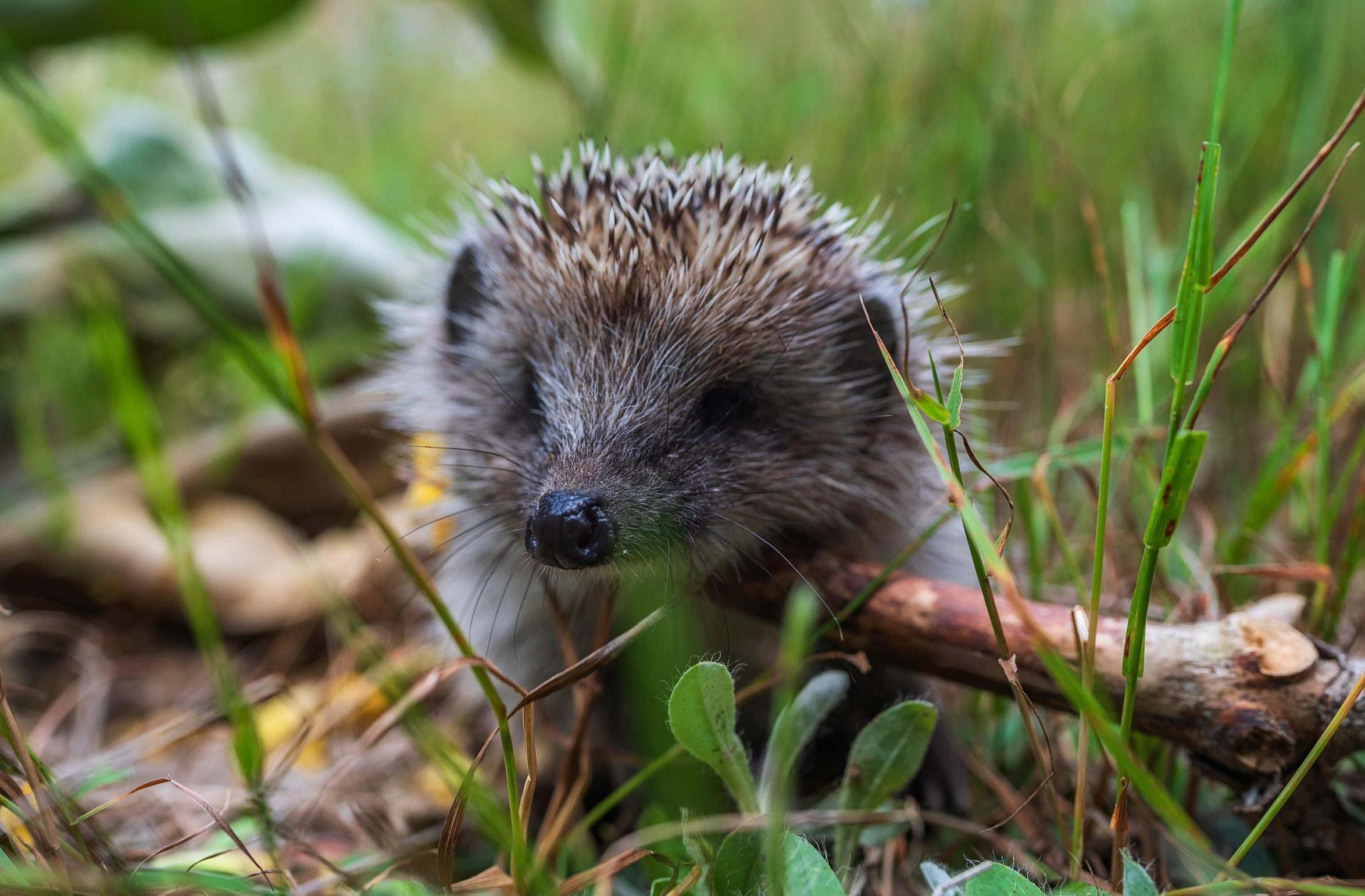 How to re-wild your garden, from ponds and trees to attracting butterflies and hedgehogs - Country Life