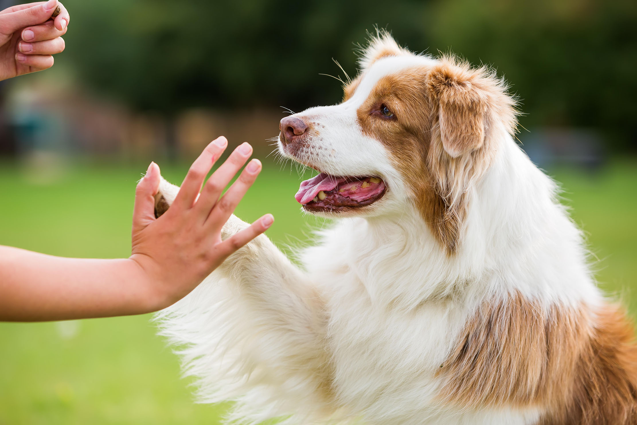 How to teach an old dog new tricks? Engage their brains as well as their bodies - Country Life