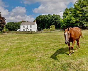 A hopelessly romantic country house for sale on the western edge of Dartmoor 1