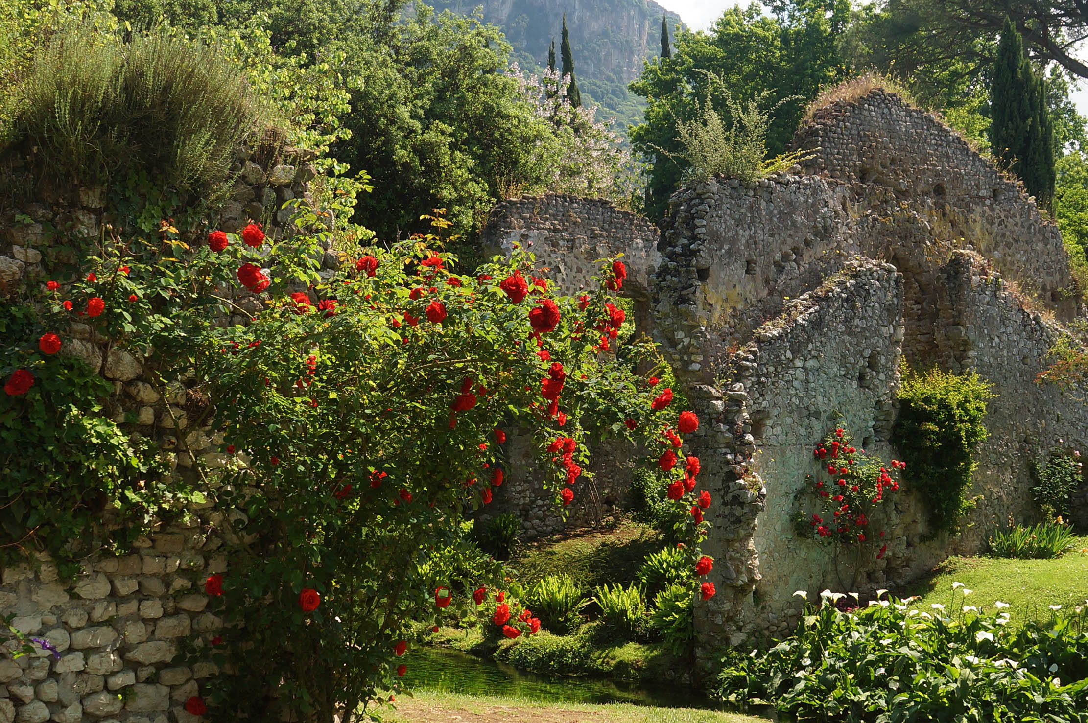 How some of the finest 'English' rose gardens are in the hills of Lazio and Umbria - Country Life