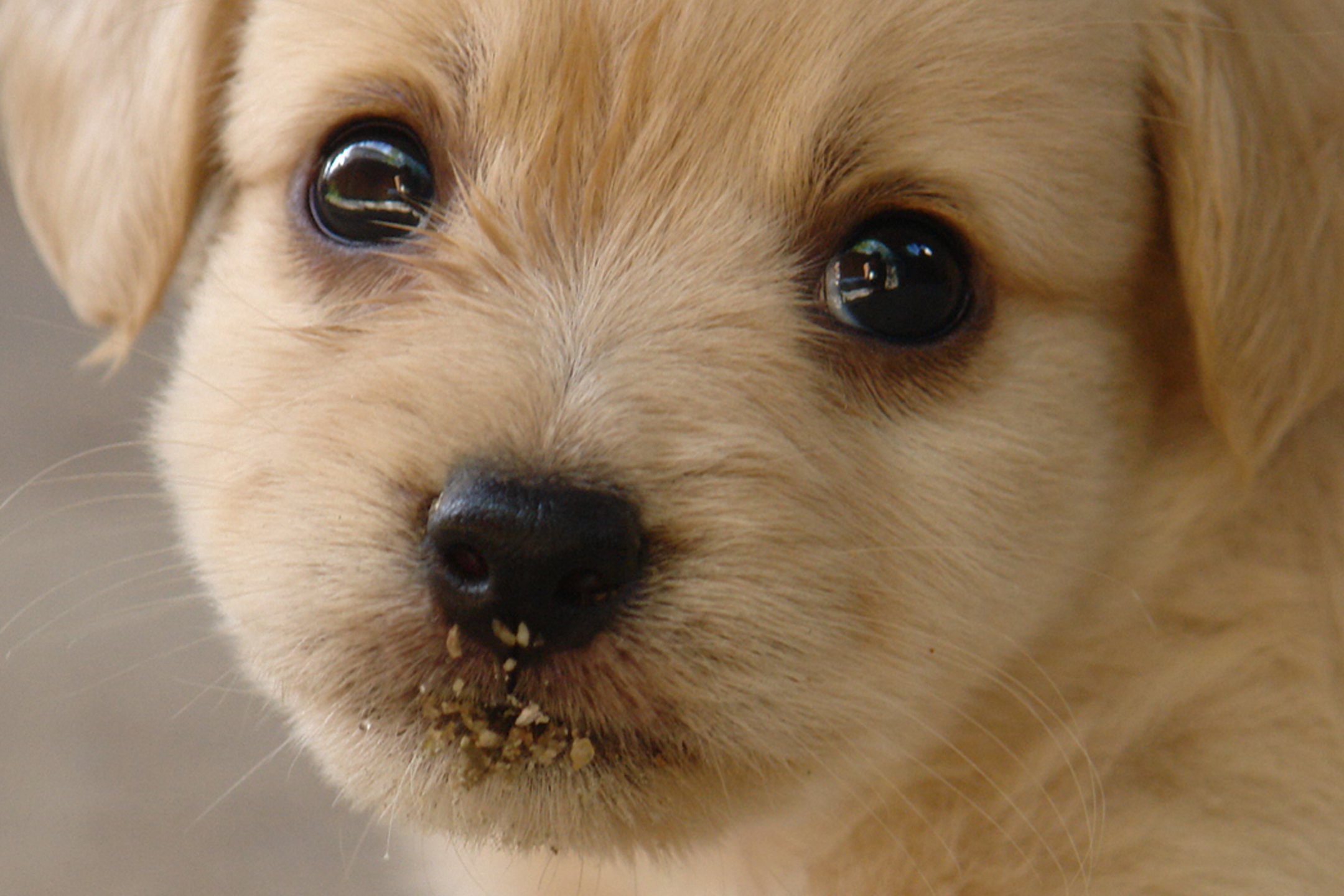 Curious Questions: Why can't we resist puppy dog eyes? - Country Life