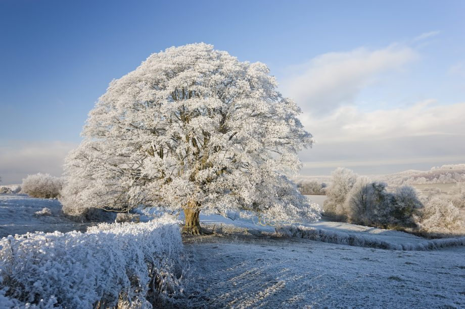Snow covered tree on Downham Hill, Uley, Gloucestershire,