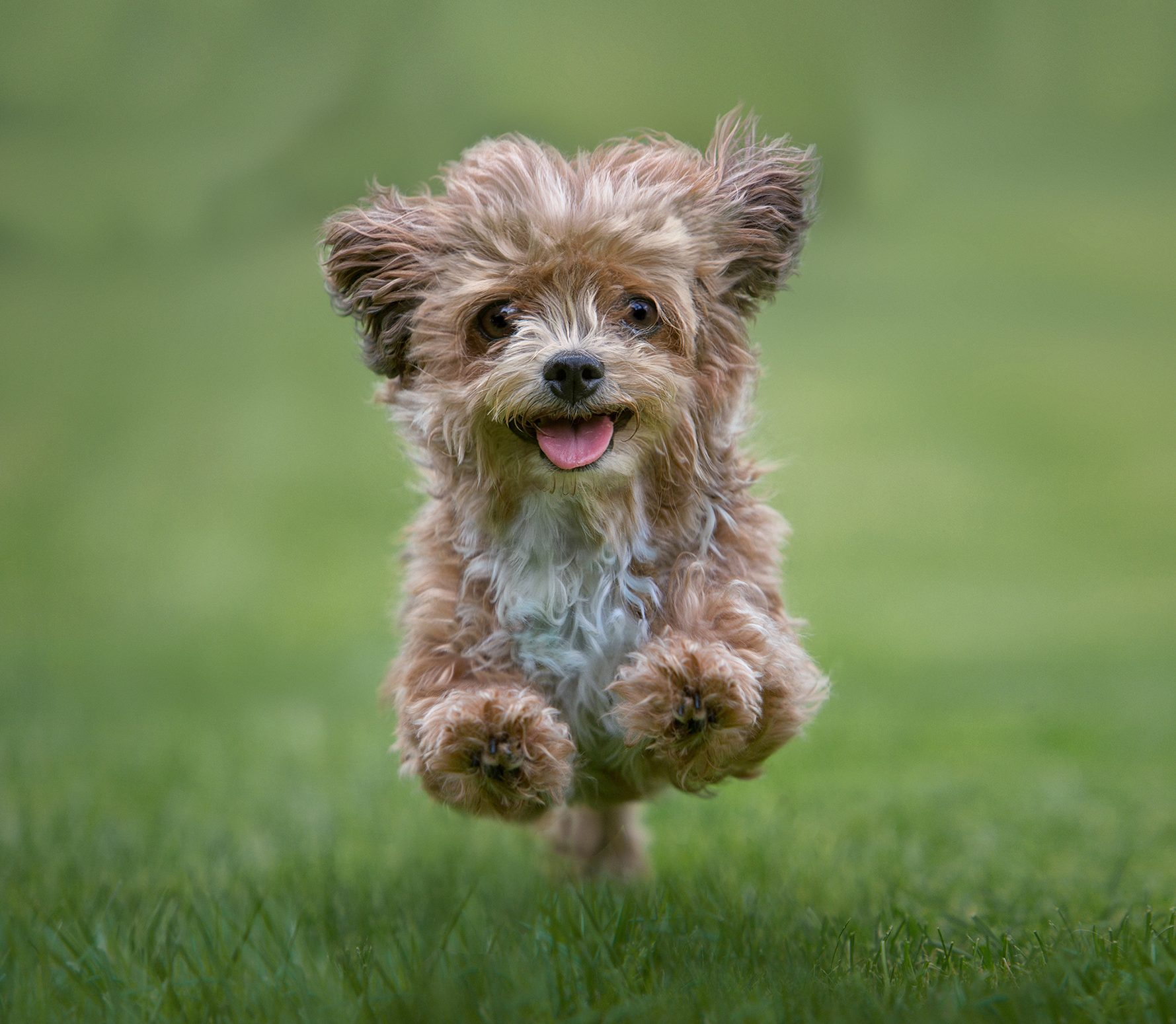 The top 20 cutest dog breeds in the world, ranked according to science - Country Life