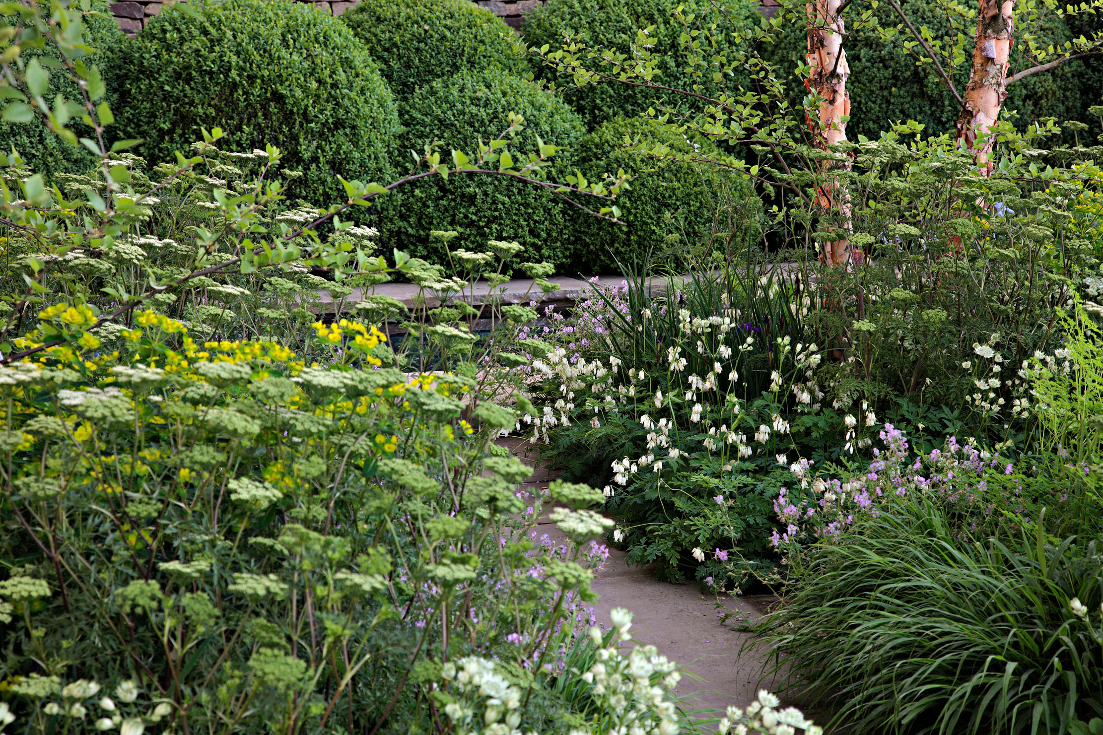 Umbellifers: The plants with 'bold structure' with soft, frothy flowers that have an ethereal quality - Country Life
