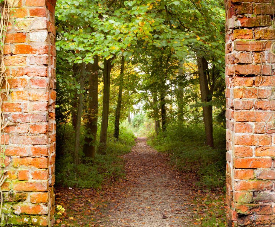 Woodland garden seen through a wall opening