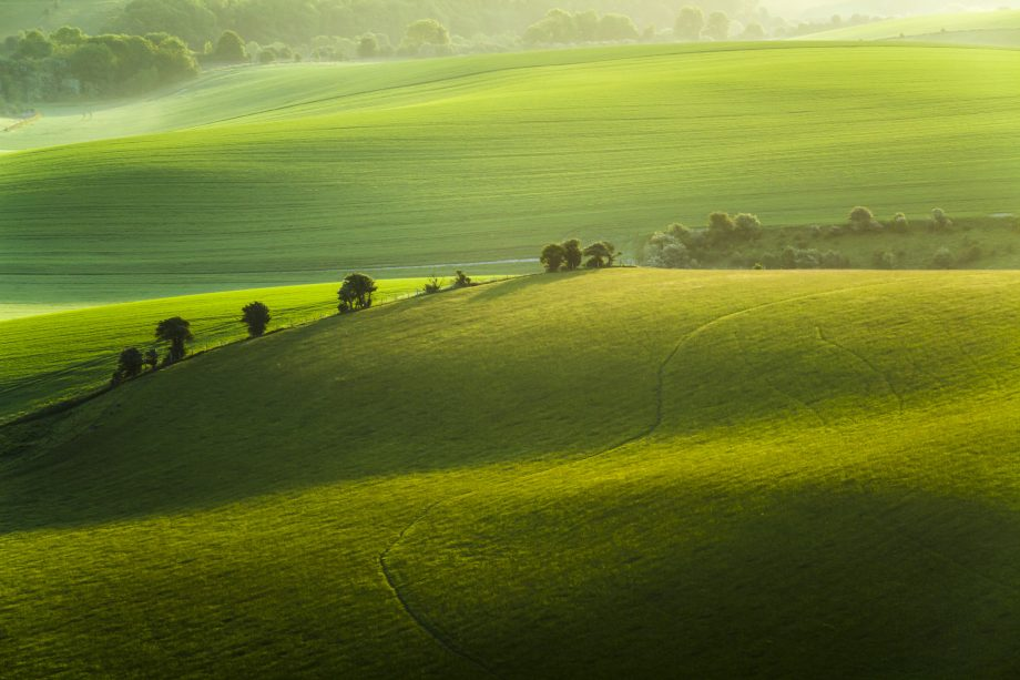Spring morning on the South Downs
