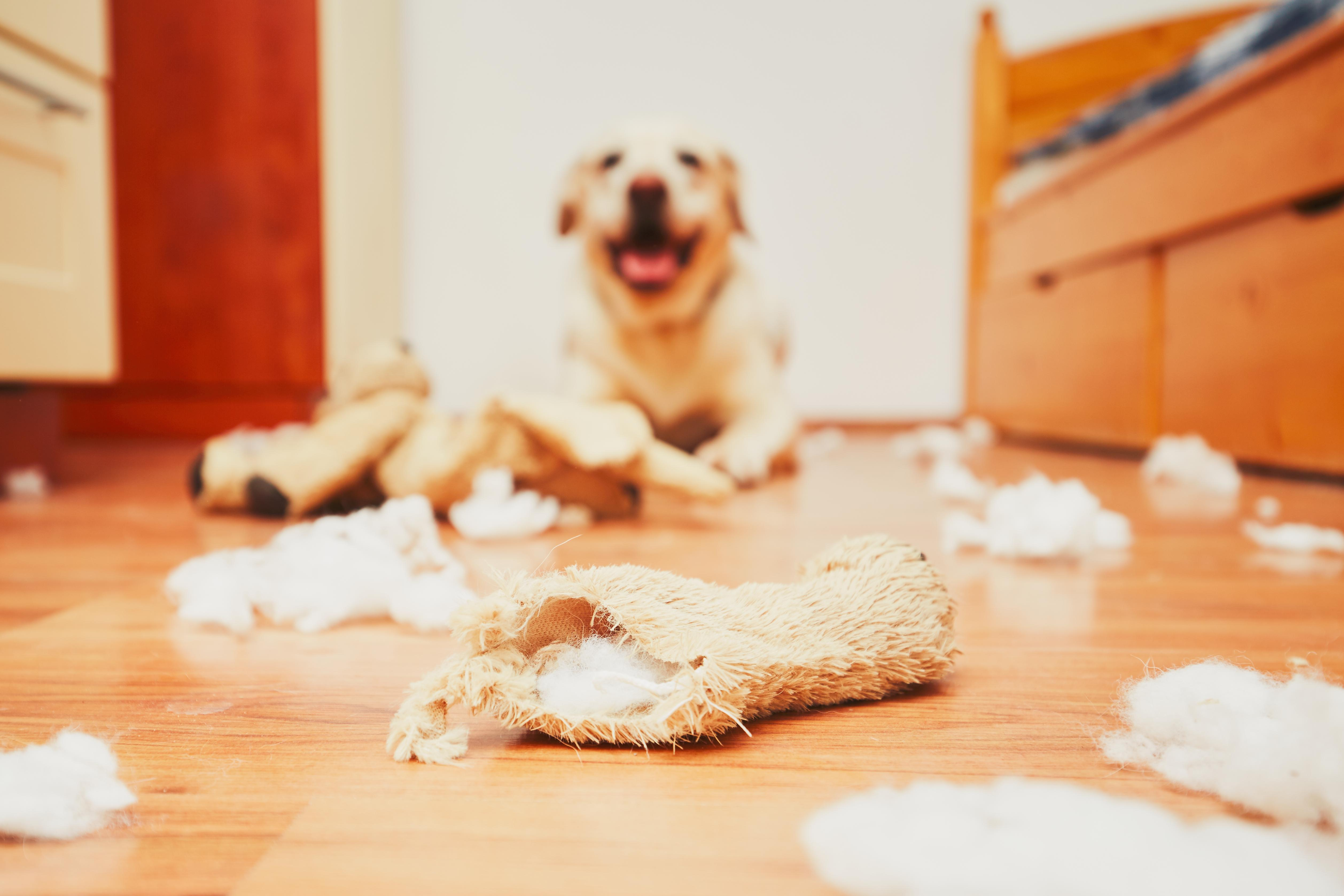The six most destructive dog breeds - Country Life