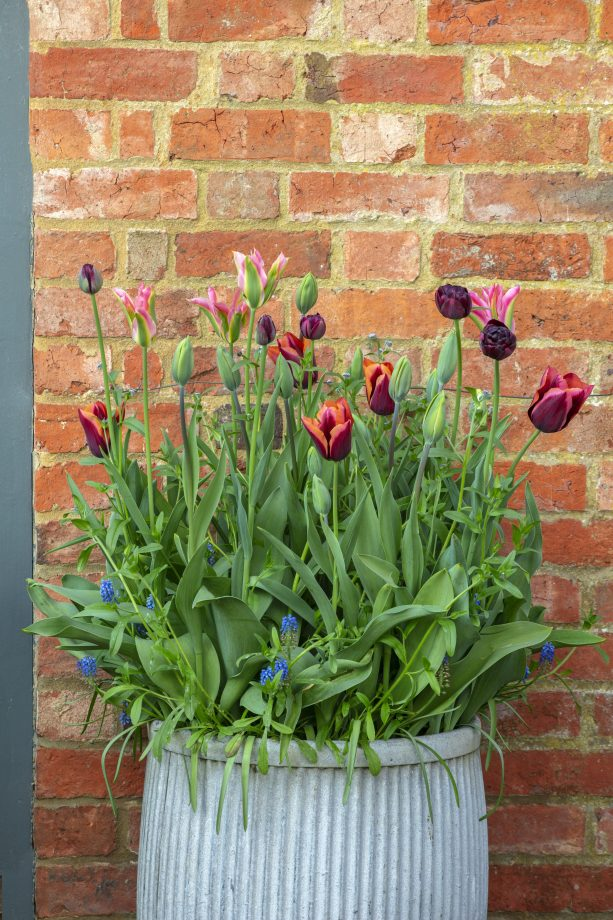DESIGNER ANGELA COLLINS: CONTAINER WITH TULIPS